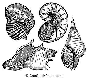divers, dessiné, ensemble, seashell., main