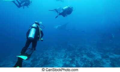 Divers meet mantas, Maldives - Divers meet mantas on Ari-...