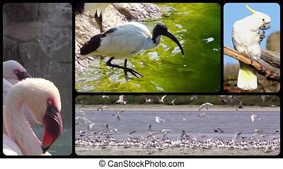 Diverse birds into the wild montage