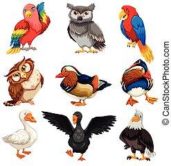 Diverse Birds Standing Set