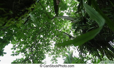 Diverse Canopies | Tropical Rainforest, Costa Rica - Medium ...