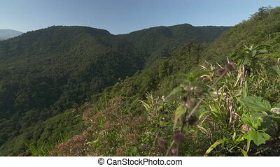 Diverse Tropical Rainforest Trees, Costa Rica - Wide low-...