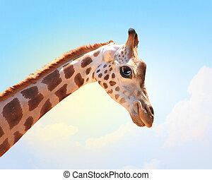 diversión, bozal, manchado, jirafa