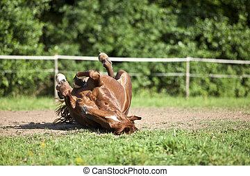 diversión, caballo, teniendo, espalda, colocar