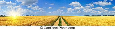 diversión, sol, y, campo, lleno, de, trigo