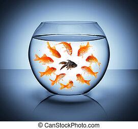 diversidad, negro, pez, -, concepto