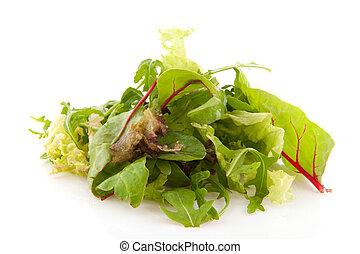 Diversity mixed lettuce