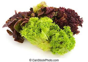 Diversity of Lettuce