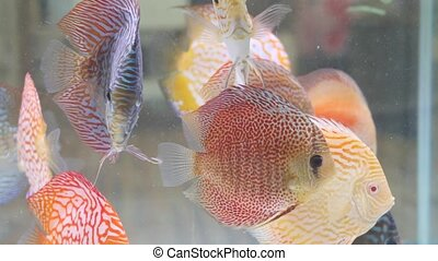 Diversity of tropical fishes in exotic decorative aquarium. Assortment in chatuchak fish market pet shops. Close up of colorful pets displayed on stall. Variety for sale on counter, trading on bazaar