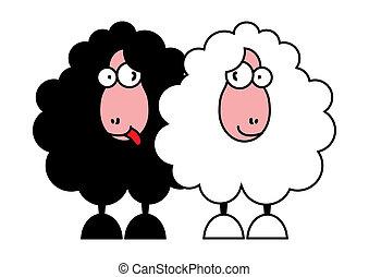 divertente, bianco, nero, sheeps