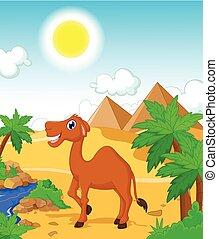 divertente, cammello, cartone animato, con, deserto