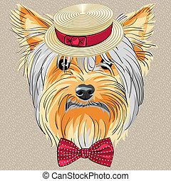divertente, cane, yorkshire, vettore, hipster, terrier,...