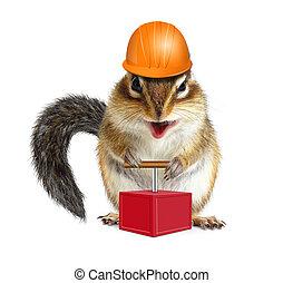 divertente, concetto, chipmunk, duro, detonatore, cappello, animale, demolizione