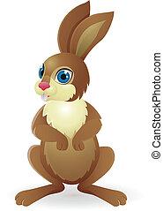 divertente, coniglio