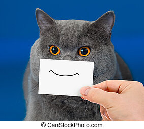 divertente, gatto, ritratto, con, sorriso, su, scheda