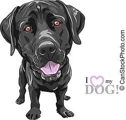 divertente, labrador, razza, cane, vettore, nero, cartone animato, cane da riporto