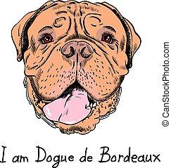 divertente, mastino, cane, francese, vettore, hipster, cartone animato