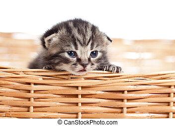 divertente, piccolo, gattino, in, canestro wicker