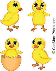 divertente, pollo, cartone animato