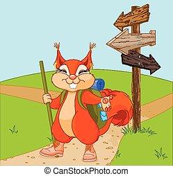 divertente, scoiattolo, passeggiata