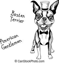divertido, boston, casta, hipster, sonriente, terrier, ...