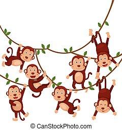 divertido, cartoo, ilustrador, monos