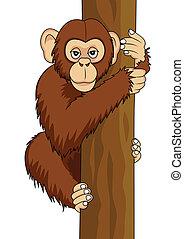 divertido, chimpancé