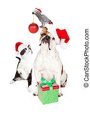 divertido, compuesto, perro, gato, pájaro, navidad