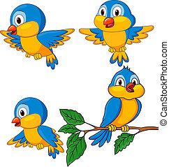 divertido, conjunto, aves, caricatura