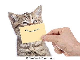 divertido, feliz, joven, gato, retrato, con, sonrisa, en, amarillo, cartón, aislado, blanco