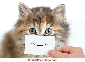 divertido, gatito, retrato, con, sonrisa, en, tarjeta