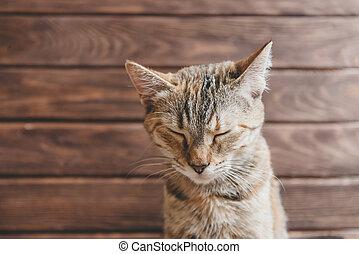 divertido, gato, con, cerrado, eyes.
