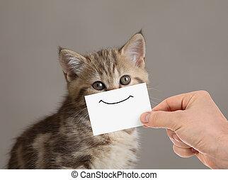 divertido, gato, retrato, con, sonrisa, en, cartón