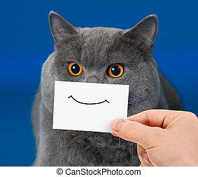 divertido, gato, retrato, con, sonrisa, en, tarjeta