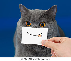 divertido, gato, retrato, con, sonrisa