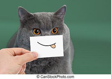divertido, gato, retrato, con, sonrisa, y, lengua