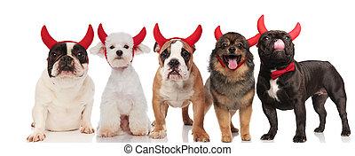 divertido, grupo, de, cinco, perros, llevando, diablo rojo, cuernos