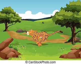 divertido, guepardo, selva