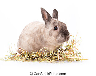 divertido, poco, rabbit.