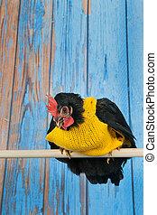 divertido, pollo, suéter, amarillo
