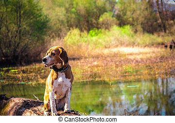 divertido, puro, lakeside., grande, concept., casta, perro,...