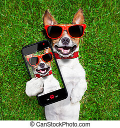 divertido, selfie, perro