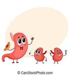 divertido, sonriente, estómago humano, y, riñón, caracteres, órganos digestivos