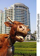 divertido, vaca, -, escena urbana