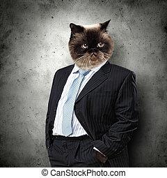 divertido, velloso, gato, juicio negocio