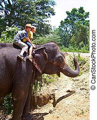 divertimento, sentiero per cavalcate, bambini, detenere, elefante