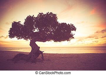 Retro toned Aruba beach Divi Divi tree at sunset