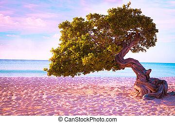 Idyllic Aruba beach with sand, ocean and divi divi tree.