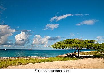 Divi-Divi Tree of Aruba. Sea. Sky. Ocean. Tropics. Caribbean...