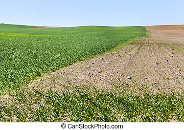 the agricultural field